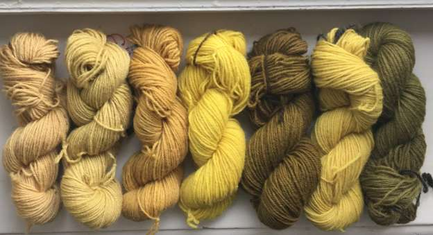 Skeins of wool, dyed with natural colours (goldenrod and weld)